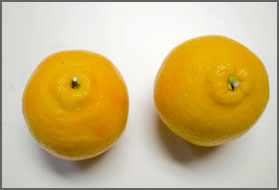 good contrast oranges image