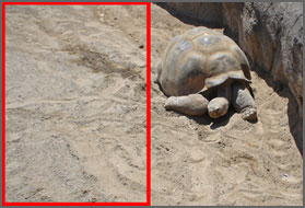 left sectioned tortoise image